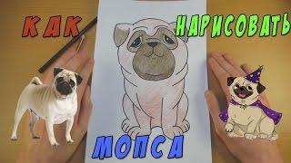 Как Нарисовать Мопса | Рисуем Собаку | Уроки Рисования(Как Нарисовать Собаку. В этом видео я вам покажу как нарисовать собаку породы Мопс. Этот рисунок способен..., 2017-01-10T08:47:50.000Z)