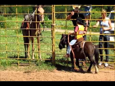 Montarias Losnak Bauru - Cavalos
