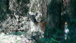 Zwierzęta leśne 3