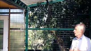 Знакомство с голубятней, секреты и тонкости голубятни...(Вот и готова новая голубятня! При строительстве ее я учел разные полезные для голубей советы и тонкости..., 2014-12-24T07:02:48.000Z)