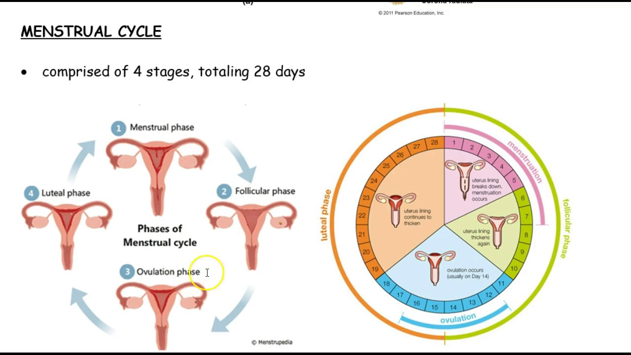 ebony-naked-menstrual-cycle-tumblr