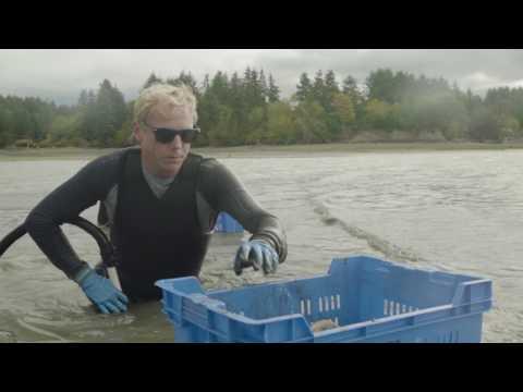 Taylor Shellfish Farms Story