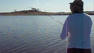 Lake Wivenhoe Powertail Catfish