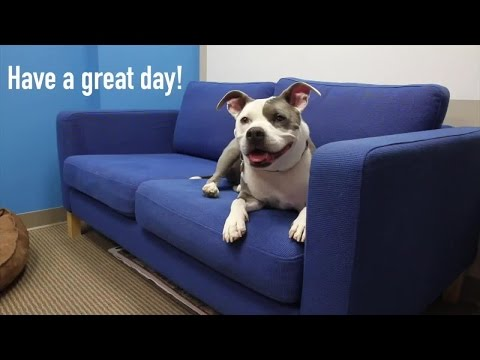 7 Simple Tips for a Successful Take Your Dog to Work Day