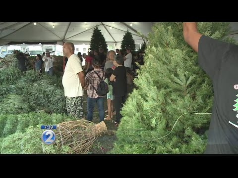 Christmas trees in high demand post-Thanksgiving