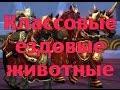 World of Warcraft - Классовые ездовые животные