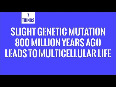 Slight Genetic Mutation 800 Million Years Ago Leads To Multicellular Life