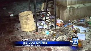 Testudo on fire on University of Maryland campus