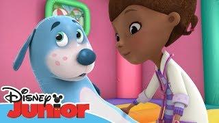 Dottoressa Peluche - Ospedale dei giocattoli - Buon compleanno Boppy - Dall'episodio 103