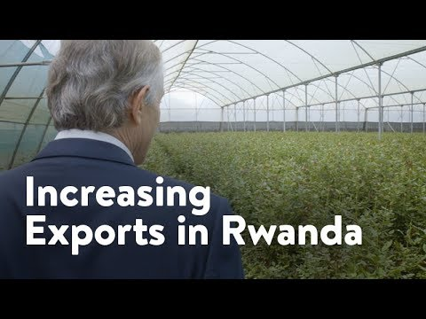 Bella Flowers | Increasing Exports in Rwanda