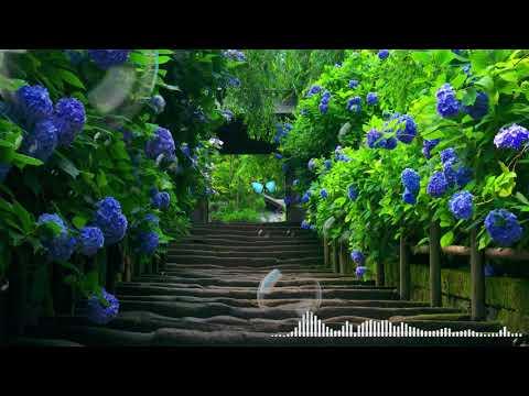 morning-relaxing-music- -musik-piano-santai- -musik-santai-indah- -santai-belajar-musik