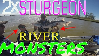 two sturgeon monsters caught 1o minutes from home may 2017