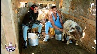 """Ruby și Dorian Popa, puși să mulgă caprele: """"Sigur nu o doare dacă trag?"""""""