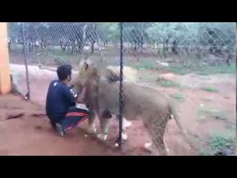 Saying Good Night To The Lions Befor Going Home:)