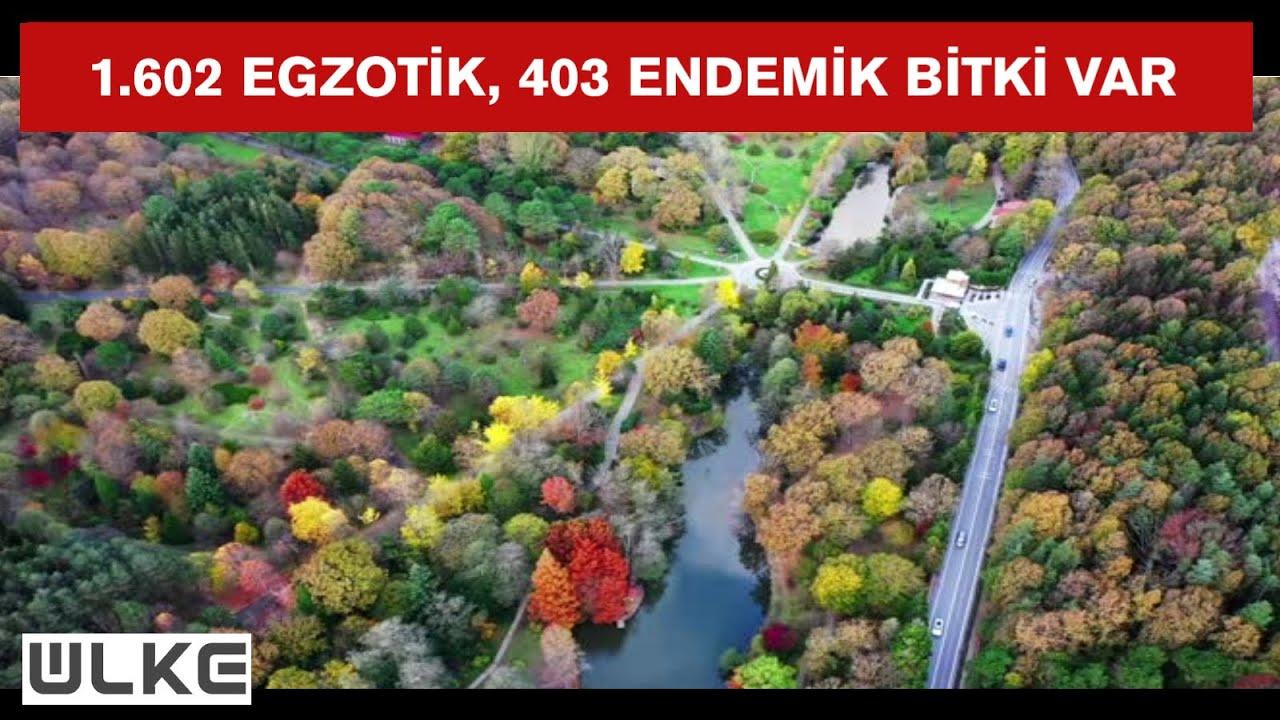 ATATÜRK ARBORETUMU / sarıyer Atatürk Arboretumu'na nasıl gidilir ?