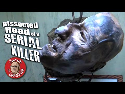 Bissected Head Of A Serial Killer At Ripley's Believe It Or Not WIsconsin Dells