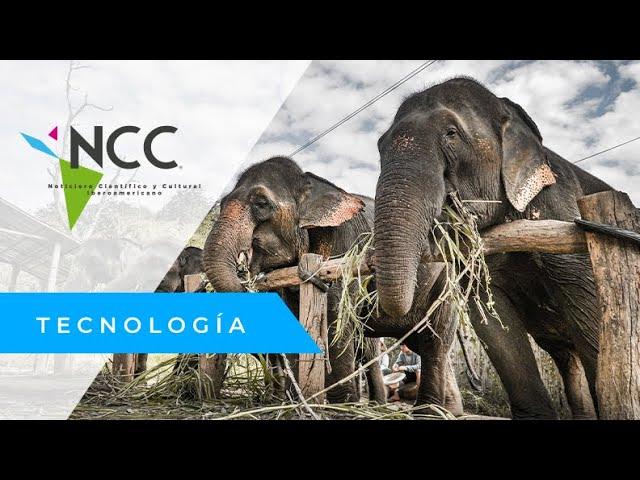 Elefantes rescatados inician una nueva vida en reserva natural de Tailandia