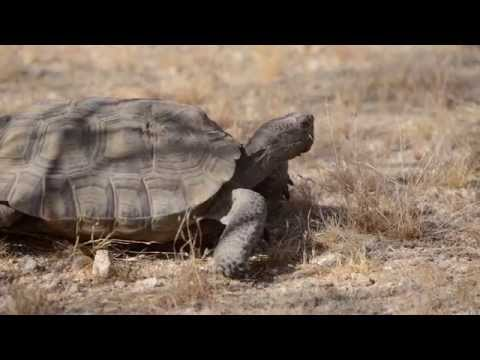 When and How to Move a Tortoise