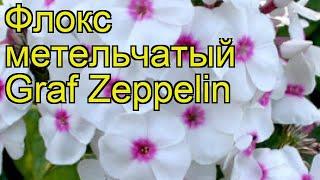видео Флокс метельчатый Граф Цеппелин