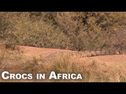 Crocs in Africa