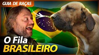 FILA BRASILEIRO, O MELHOR CÃO DE GUARDA?! | RICHARD RASMUSSEN