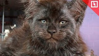 Кошка с человеческим лицом