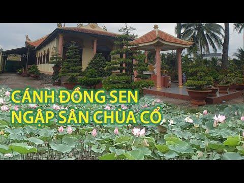 Chùa Việt #212 | Đồng Tháp Mười thu nhỏ ngập tràn hoa sen trong sân chùa cổ Phú Khánh ở Tiền Giang