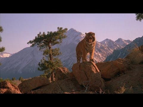 IMAX Speed (1984): Hunter Chased By Tiger [HD]