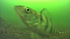 Ice Fishing Minnesota, Eagle Lake, Perch & Pike