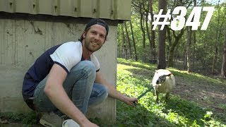 #347: Verstoppertje in Pretpark met Dieren [OPDRACHT]