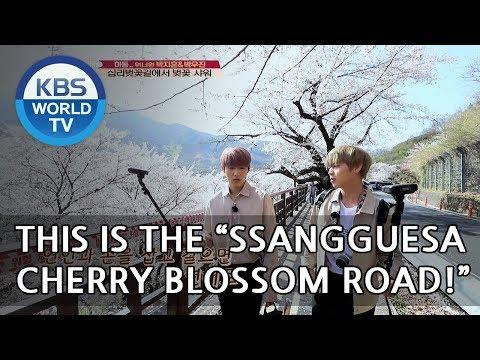 BEAUTIFUL♥  Woojin X Jihoon walk by the Cherry blossom flowers!! [Battle Trip/2018.05.20]