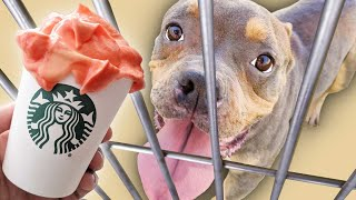 Buying 100 PUMPKIN Puppuccinos For Homeless Dogs!
