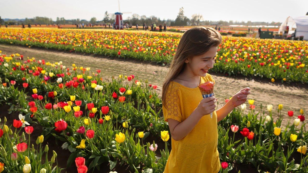 Tulip land - YouTube