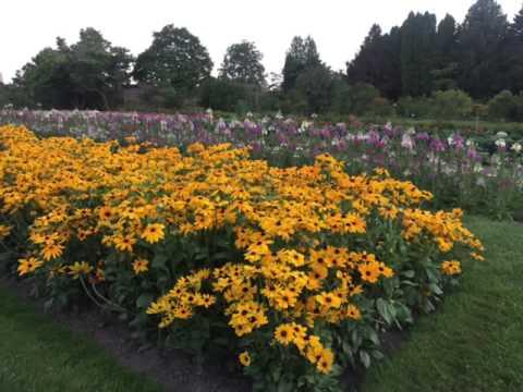 حديقة العرائس والزهور اوتاوا كندا Ottawa flower garden
