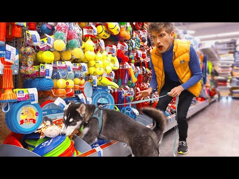 Buying Everything My puppy Touches!