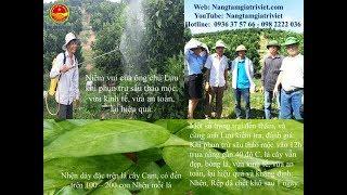 Thảo mộc đa năng V-VFARM diệt sạch nhện, sâu, rày, rệp sau một ngày tại nhà anh Lưu, Lục Ngạn, BG.