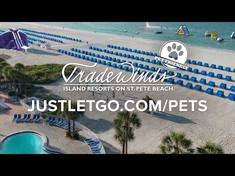 Dog Friendly Florida Beaches – St  Pete Beach Area Beaches