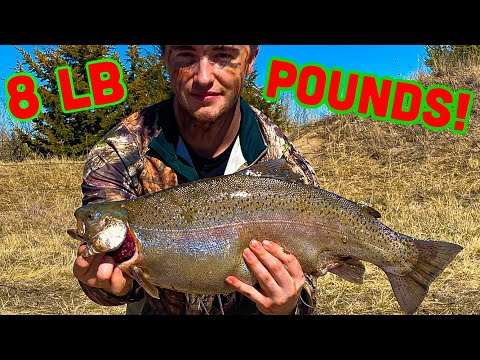 TROUT Fishing Ogallala CANAL - Nebraska | HOW TO EASILY LIMIT!!