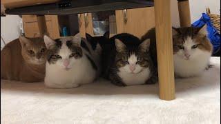 冬限定!寄り添って香箱座りする5匹の猫