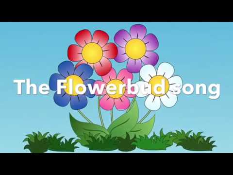The Flower Bud Song, Spring Song for Early Years, Foundation Stage, Spring/Growing Theme
