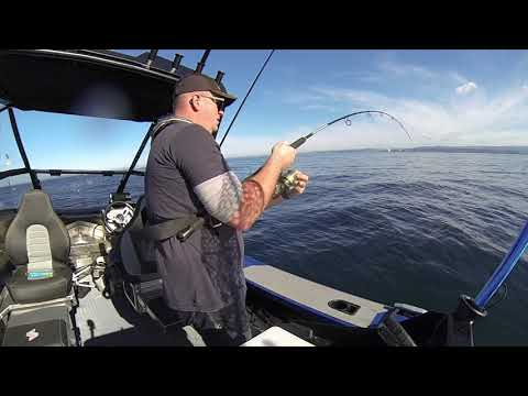 Mid Week Fishing Mission Off Napier, Hawke's Bay, New Zealand Aboard Our Stabicraft 1550 Fisher