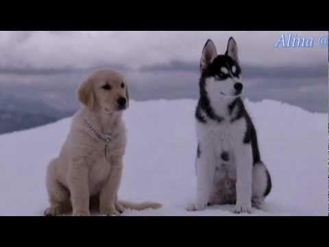 Vitalie Dani si Nelly Ciobanu - Ninge cu dragoste karaoke