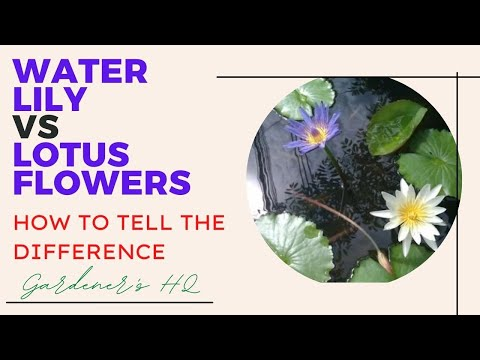 I Chanced on some Water Lily Plants on my cycle ride.