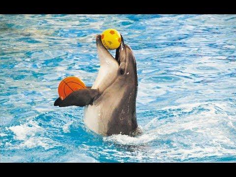 Соль-Илецк 2018 - Дельфинарий. Вся правда о дельфинарии в Соль-Илецке.