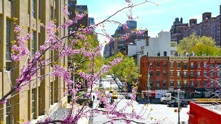 Download Video Streets of New York City, Manhattan Walk, 4K video MP3 3GP MP4