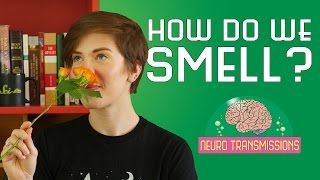 Repeat youtube video How Do We Smell?