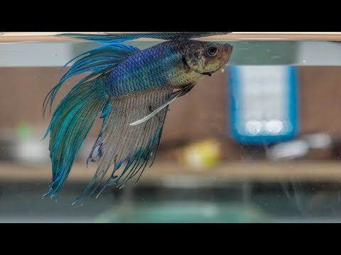 How I Made A Small Aquarium For My Betta Fish | DIY