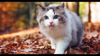 Are Ragdolls Cats intelligent?