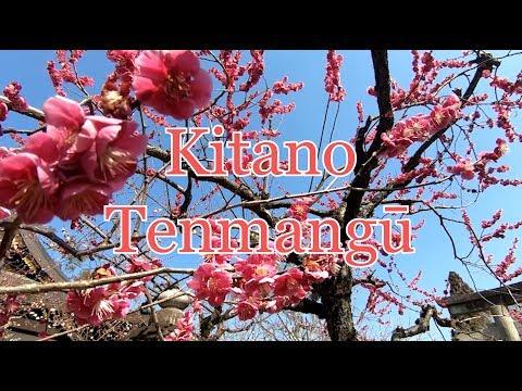 Kitano Tenmangū (Plum Blossom) Your Videos