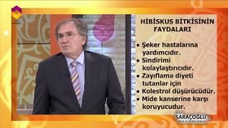 Tıbbi Bitkiler - Hibiskus Bitkisi - DİYANET TV
